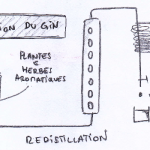 PRODUCTION DU GIN